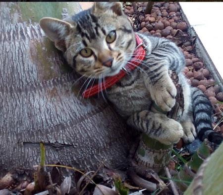 Kira, o simpático gato que nos adotou <3