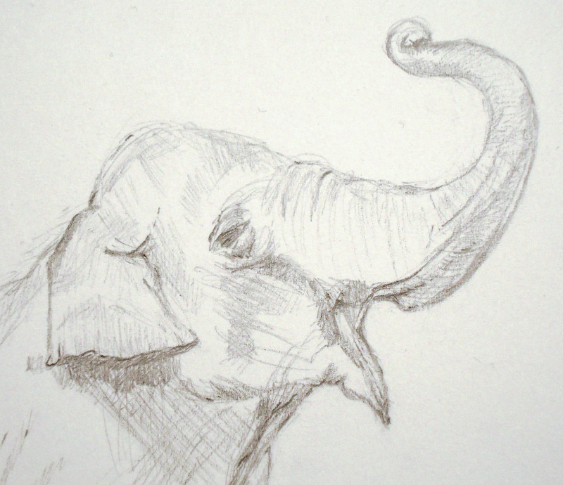 Realistic elephant face drawing