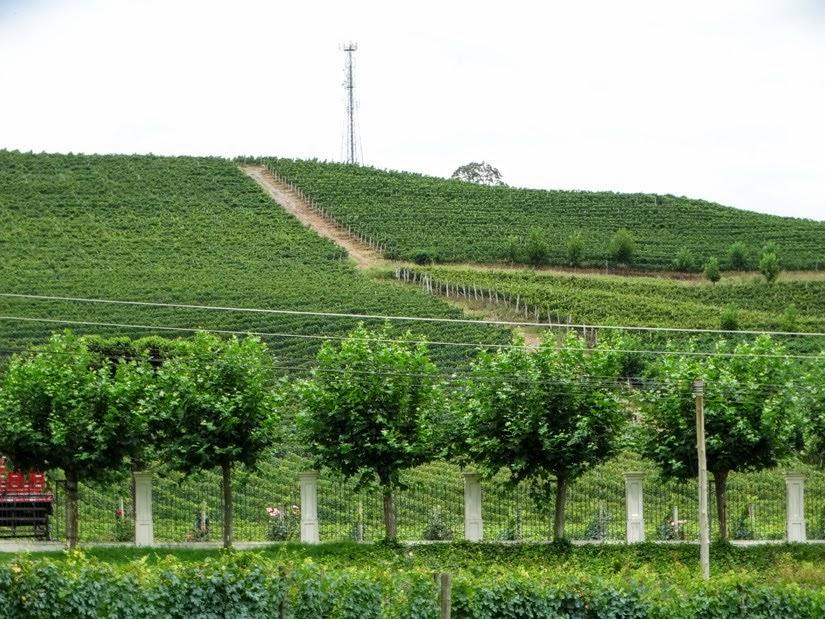 Vinícolas do Rio Grande do Sul: Vinícola Miolo