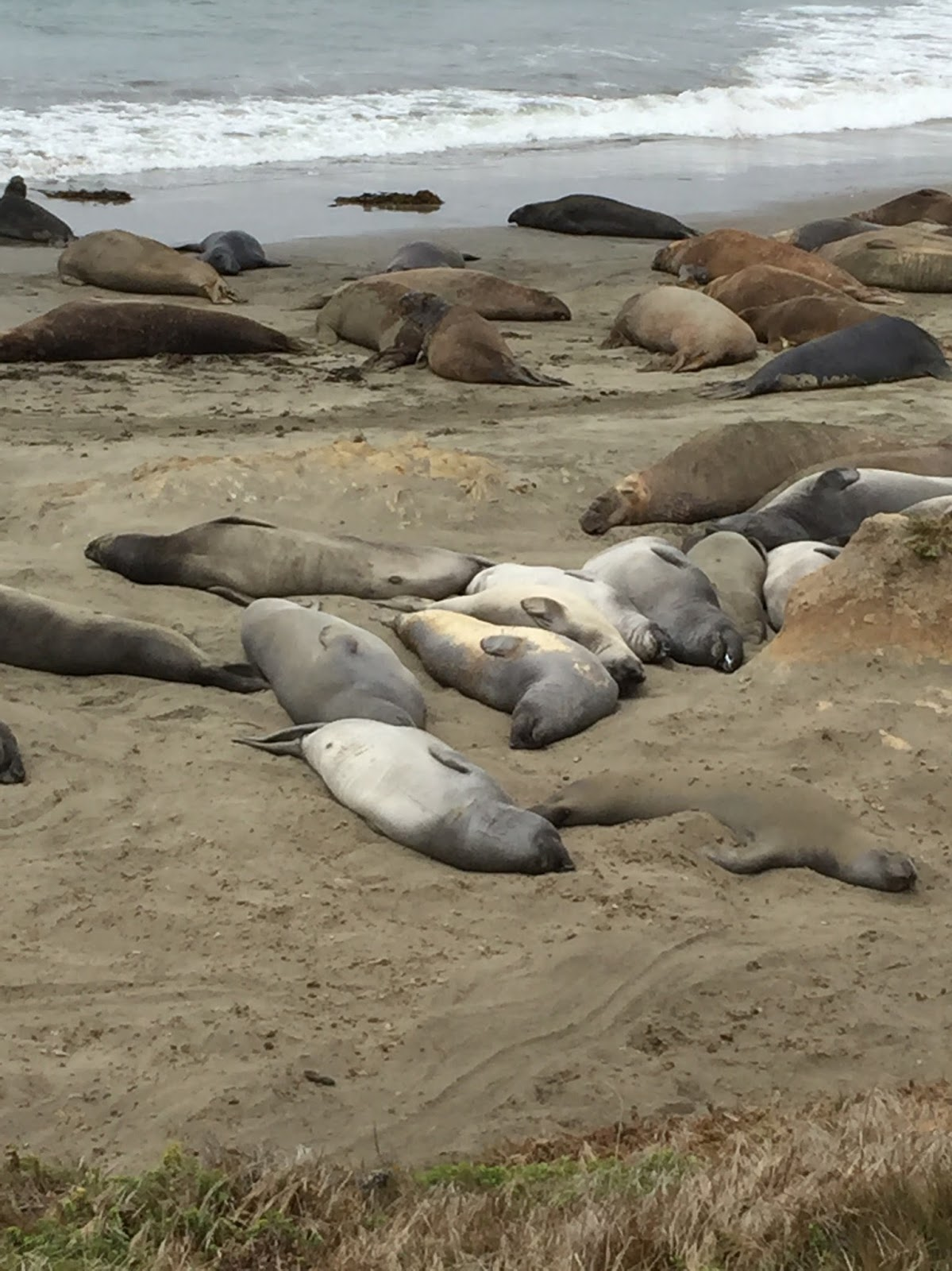 News from oak creek ranch big sur elephant seals and hiking for Big sur fishing