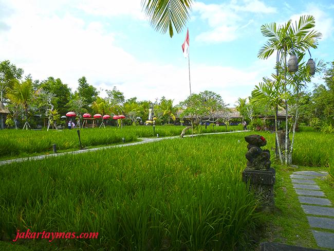 Comer en un arrozal en Bali