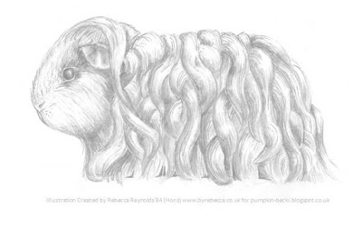 Illustration Texel Guinea Pig Rebecca Reynolds BA Hons