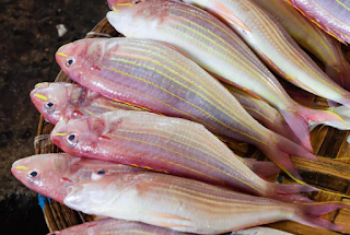 h sumber daya ikan demersal utama dieksploitasi  Kabar Terbaru- POTENSI IKAN KURISI SEBAGAI HASIL PRODUK PERIKANAN