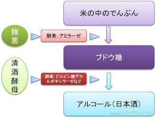 図 イラスト 米のでんぷんから麹菌と清酒酵母で日本酒を作る 酵素 アミラーゼ ピルビン酸デカルボキシラーゼ ブドウ糖