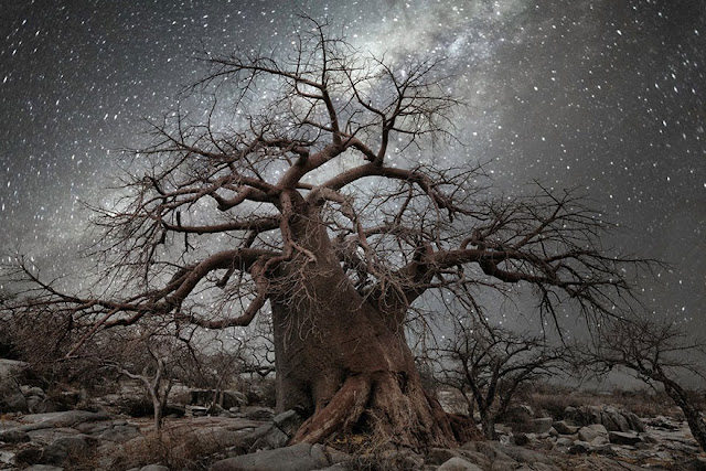 oldest trees beth moon diamond nights photography-2