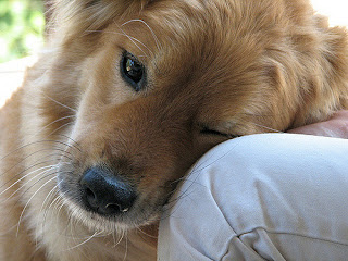 "4 Surprising Ways Your Dog Says ""I Love You"""