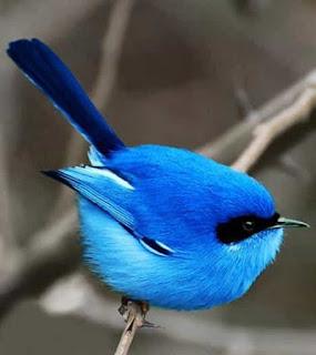 Синяя птица — забавный тест – игра