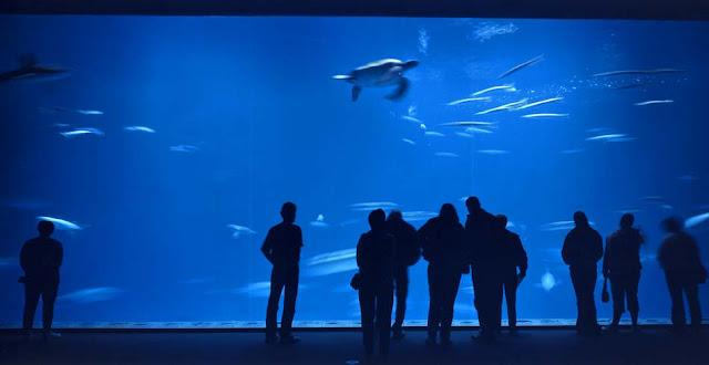 Menjajaki Monterey Bay Aquarium