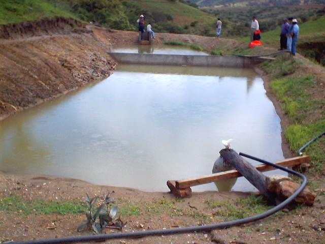 Cultivo de tilapia para peque os productores estanques for Cria de tilapia en estanques pequenos