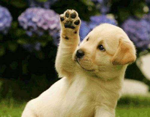 Lợi ích khi nuôi thú cưng trong nhà
