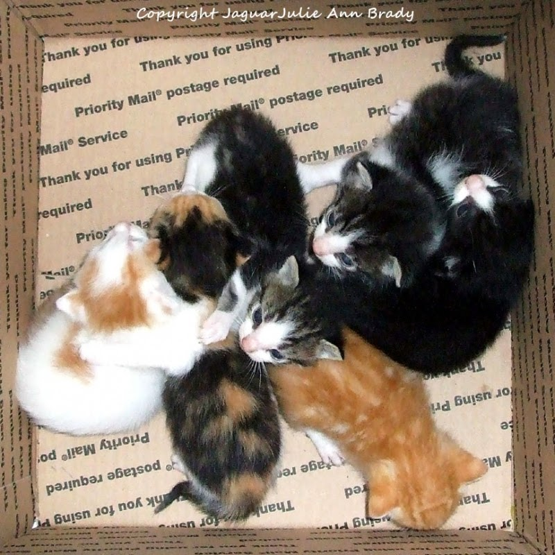 six homeless kittens rescued