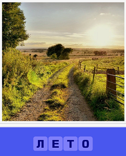 наступила лето, выросла трава и сухая дорога, изгородь вдоль дороги