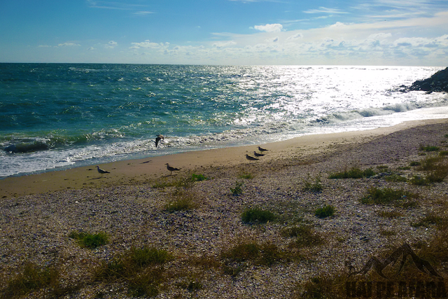 plajă sălbatică în Constanța