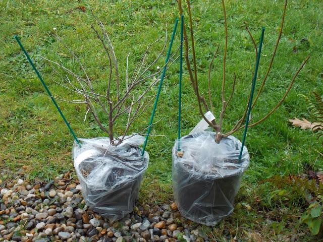 Les plantations de novembre : nouveautés