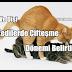 Kedilerde Çiftleşme / Kızgınlık Dönemi Belirtileri
