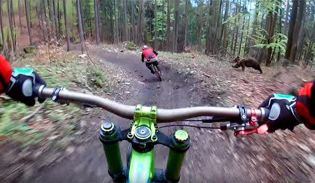 Ciclistas de montaña a punto de ser comida de un oso