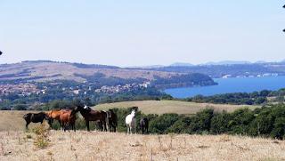 Italia, Horsexplore, maremmanhevonen, riitta reissaa