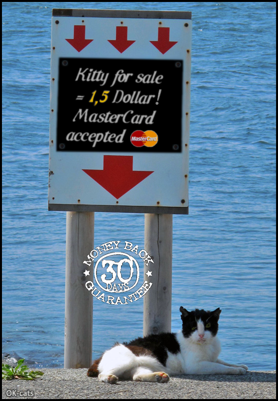 "Photoshopped Cat picture • ""Cute"" Kitty for sale ► $ 1,5 (MasterCard accepted)"