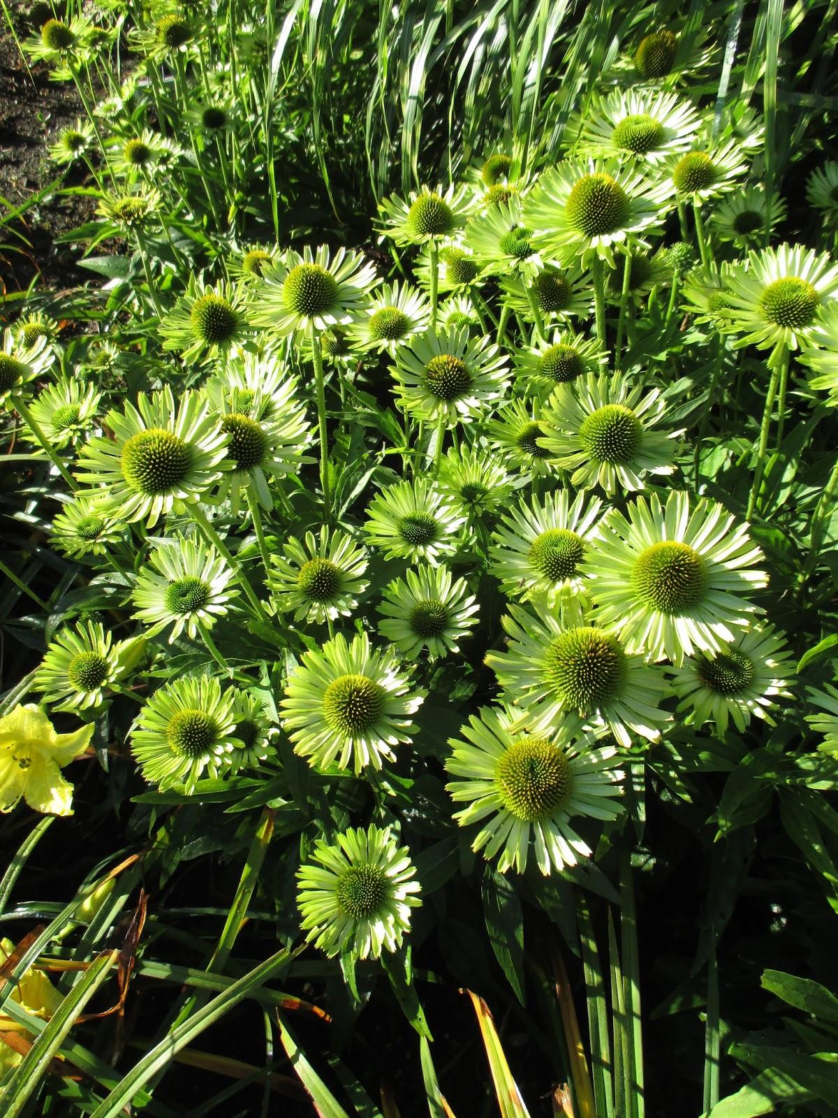 rotary botanical gardens hort blog green flowers. Black Bedroom Furniture Sets. Home Design Ideas