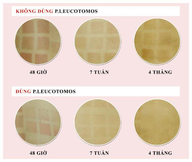 Tinh chất P.leucotomos thiên nhiên trong Sâm Angela Gold