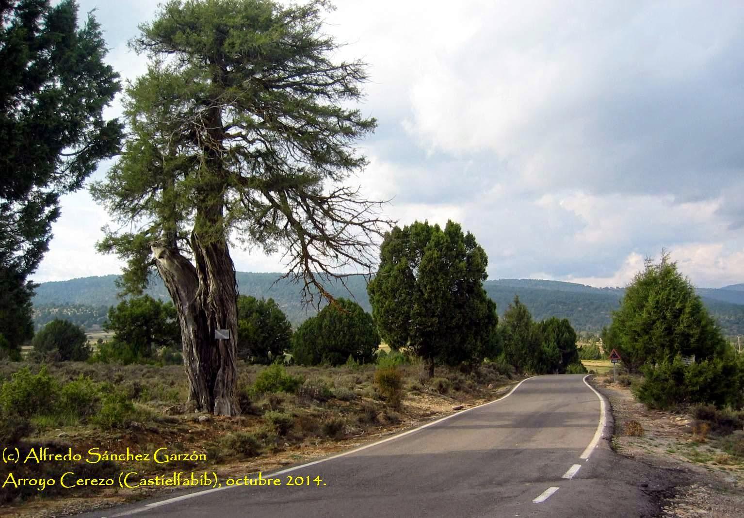 veguillas-sierra-sabina-teruel-carretera