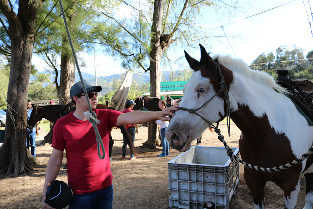 Getting to Know The Horses at the Hawaii Polo Club