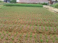 đất nông nghiệp dần trung tâm