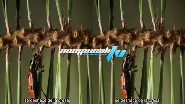 Kingdom of Plants 3D SBS