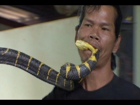 Bigfoot Evidence: Watch: Man Bites Deadly Snake