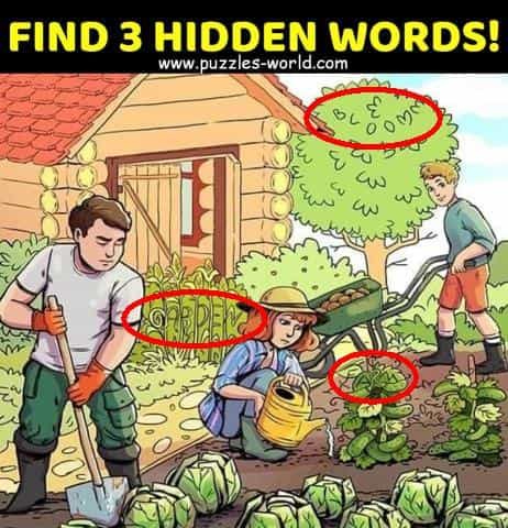 Answers to Find 3 Hidden Words