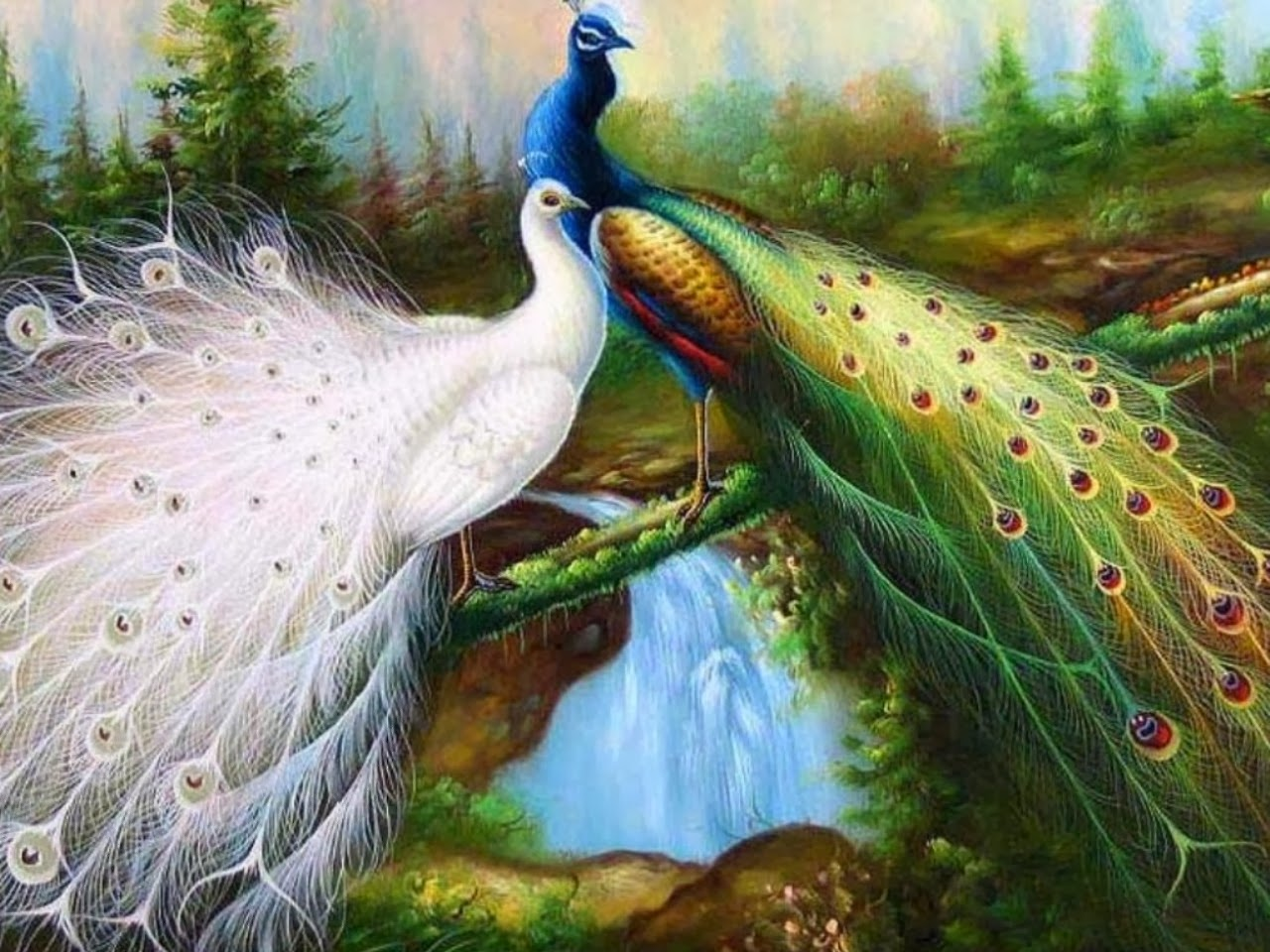 peacock wallpapers   Nice Pics Gallery