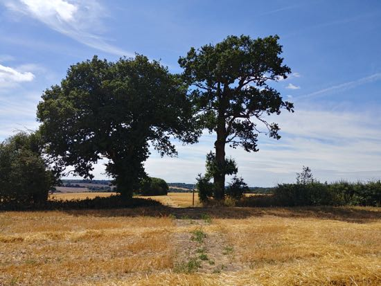 Go through the gap between the trees and head to the right of the clump of trees  - August 2018  Image by Hertfordshire Walker released under Creative Commons BY-NC-SA 4.0