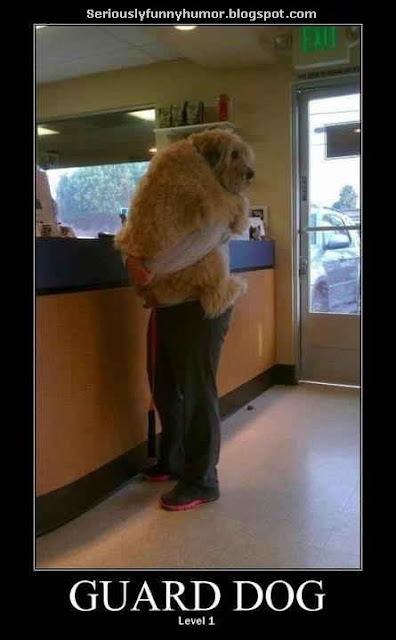 Guard dog - Level 1 - man hugging dog photo