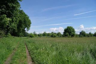 Ein Trampelpfad führt am Rand einer Wiese entlang