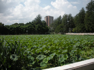 Kunming parco del lago verde