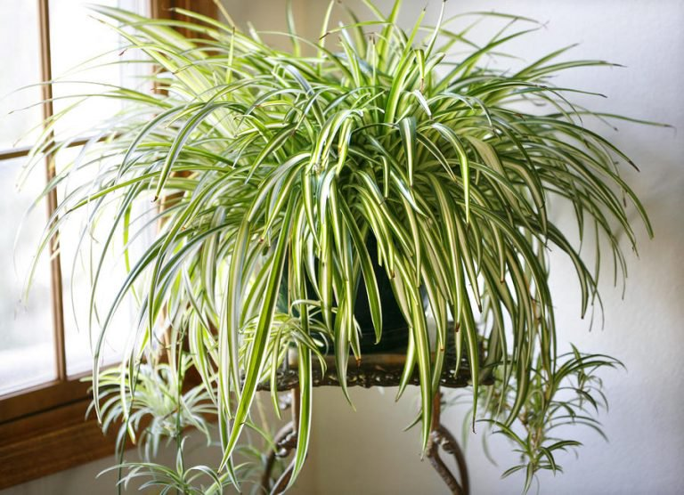 These Plants Are Oxygen Bombs And They Purify The Air In Your Home.