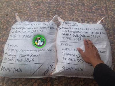 Benih Padi TRISAKTI Pesanan Ali Rahmat Nganjuk, Jatim. (Sesudah di Packing)