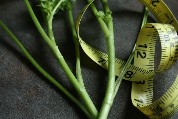 how to plant coriander