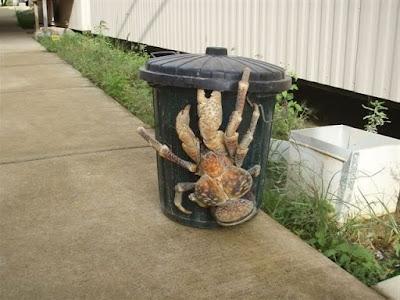 Coconut crabs ( سرطان جوز الهند )