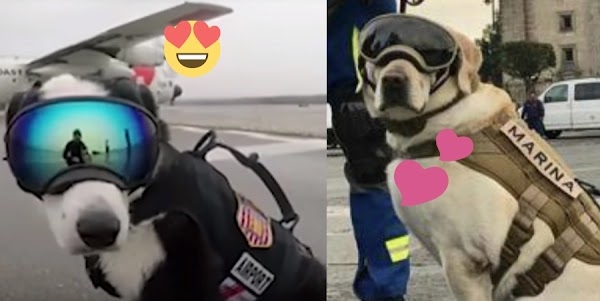 "Conoce a ""Piper"", el novio ideal para la perrita ""Frida"" (VIDEO)"