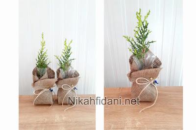 nikah tohumu alternatifi nikah fidanı 2