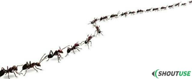 चींटी एक लाइन में कैसे चलती हैं ?, Vigyan ke sawal shoutuse
