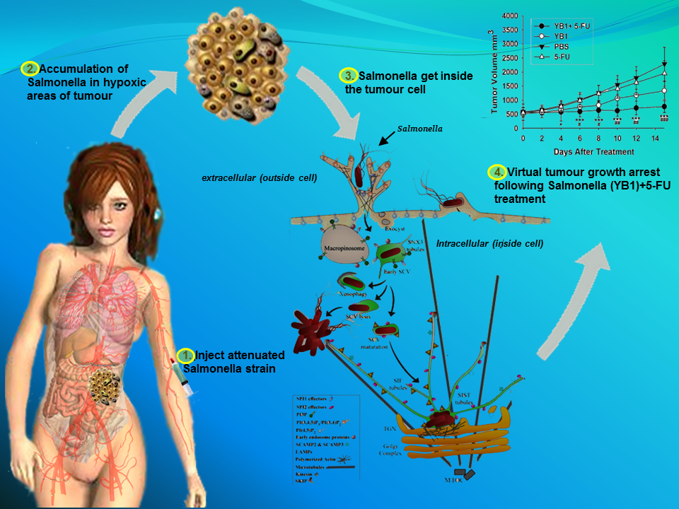 Image Result For Alternative Cancer Treatments For Stage I Ii And Iii