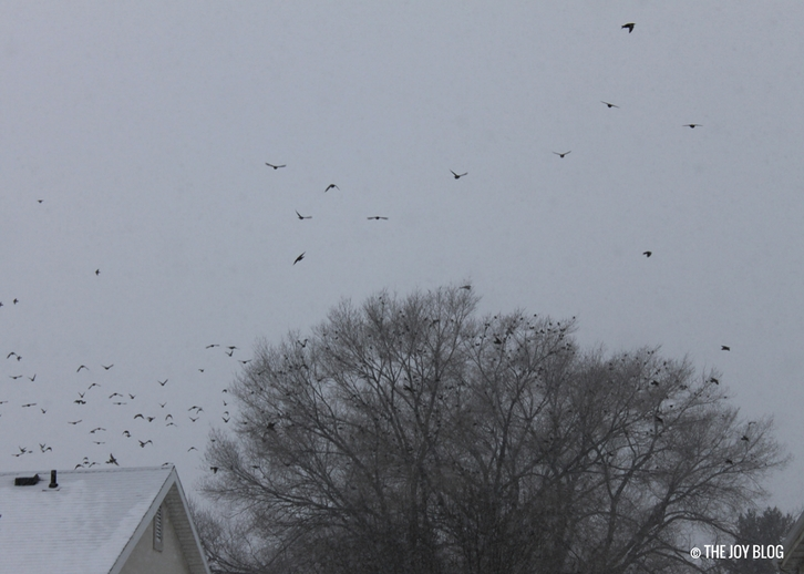 Flocks of robins fly away above the trees into the winter sky. // The Red Cat & The Red Chested Robins | WWW.THEJOYBLOG.NET