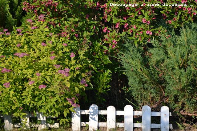 Kolorowe wariacje ogrodowe