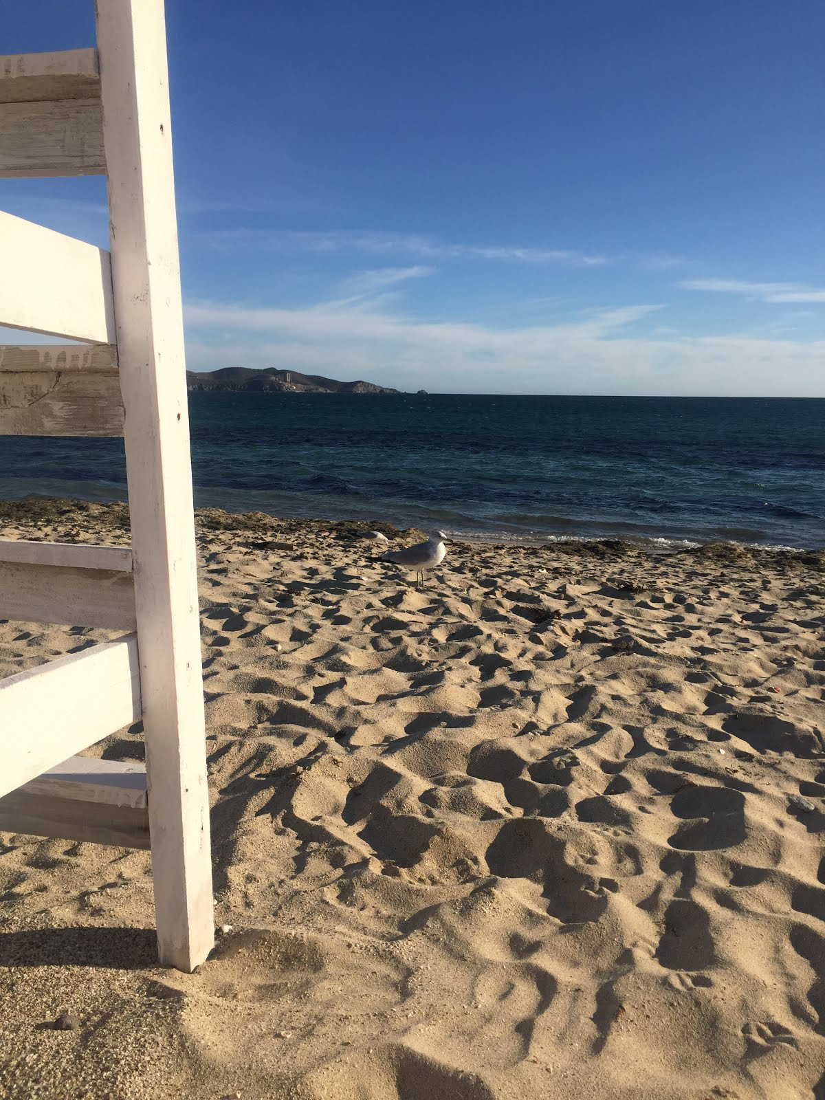 la playa de los algodones au nord ouest du mexique