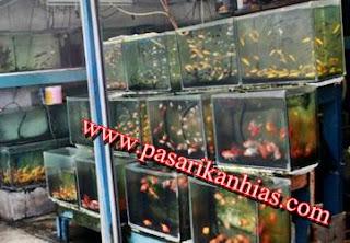 Pusat Pasar Ikan Hias Di Surabaya