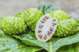 Noni Benefits For Hypertension (High Blood Pressure) - Healthy T1ps