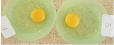 telur ayam arab