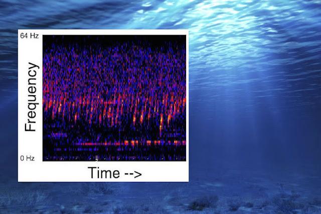 A Strange Sound May Be Alien Base Below the Pacific Ocean, Heard Since 1991 Light%252C%2Balien%252C%2Baliens%252C%2BET%252C%2BUFO%252C%2BUFOs%252C%2BMark%2BZuckerberg%252C%2Bsightings%252C%2Bangel%252C%2Briver%252C%2Barchaeology%252C%2Bbig%2Bbang%252C%2Bgold%252C%2Byeti%252C%2Bbuisness%252C%2Bastronomy%252C%2Bscience%252C%2BStargate%252C%2BBill%2BGates%252C%2Btall%2Bwhites%252C%2Bovni%252C%2Bpacific%252C%2Bastronomy%252C%2Bcosta%2Brica%252C%2Bocean%252C%2Bgod%252C%2Bsound%252C%2Bred%252C%2B11